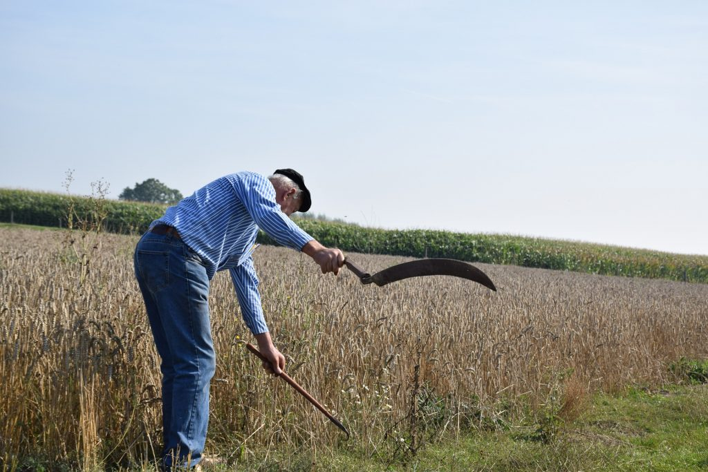 Imagem mostra um homem idoso usando uma foice em uma colheita.