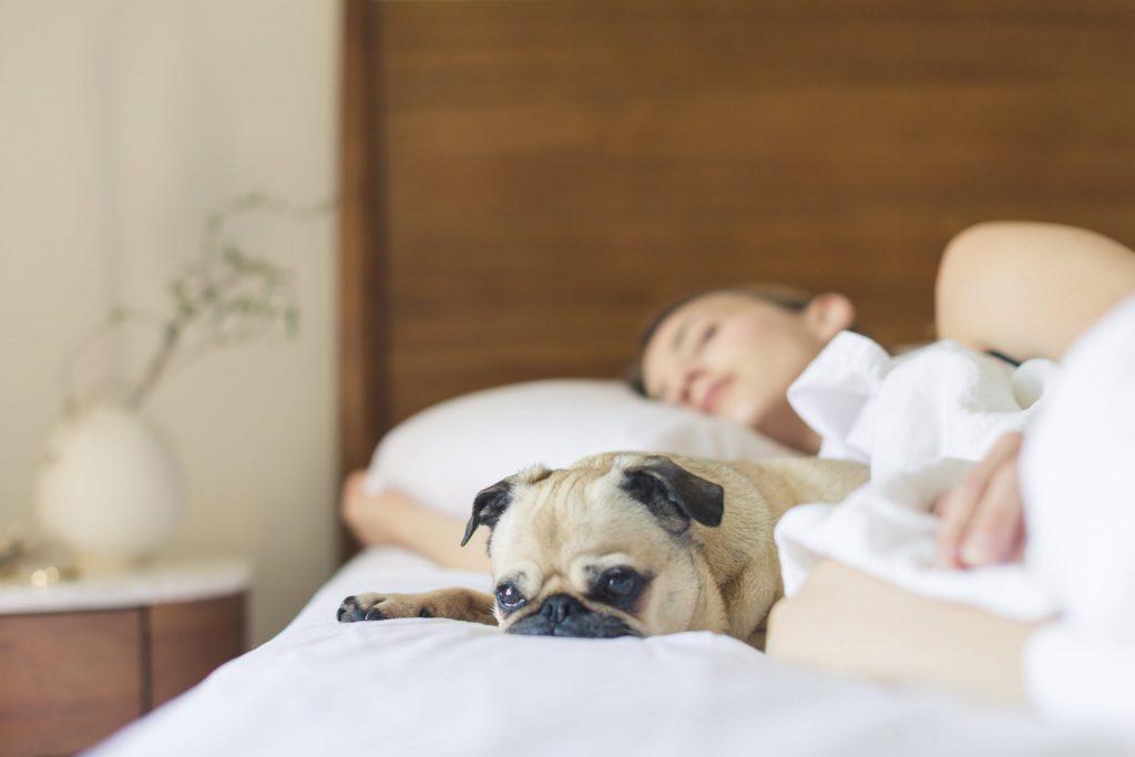 Imagem de mulher em cama de solteiro com lençóis brancos, deitada com um cachorro da raça pug.