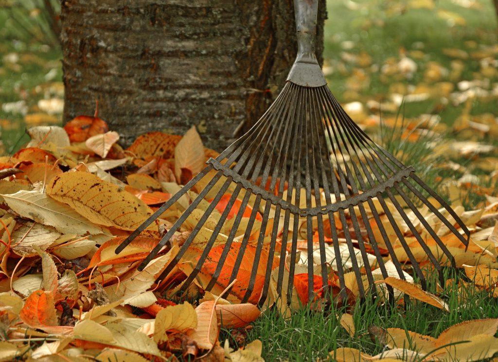 Imagem de rastelo de metal junto de folhas secas
