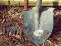 Ferramentas para jardinagem: Descubra como escolher as melhores em 2020