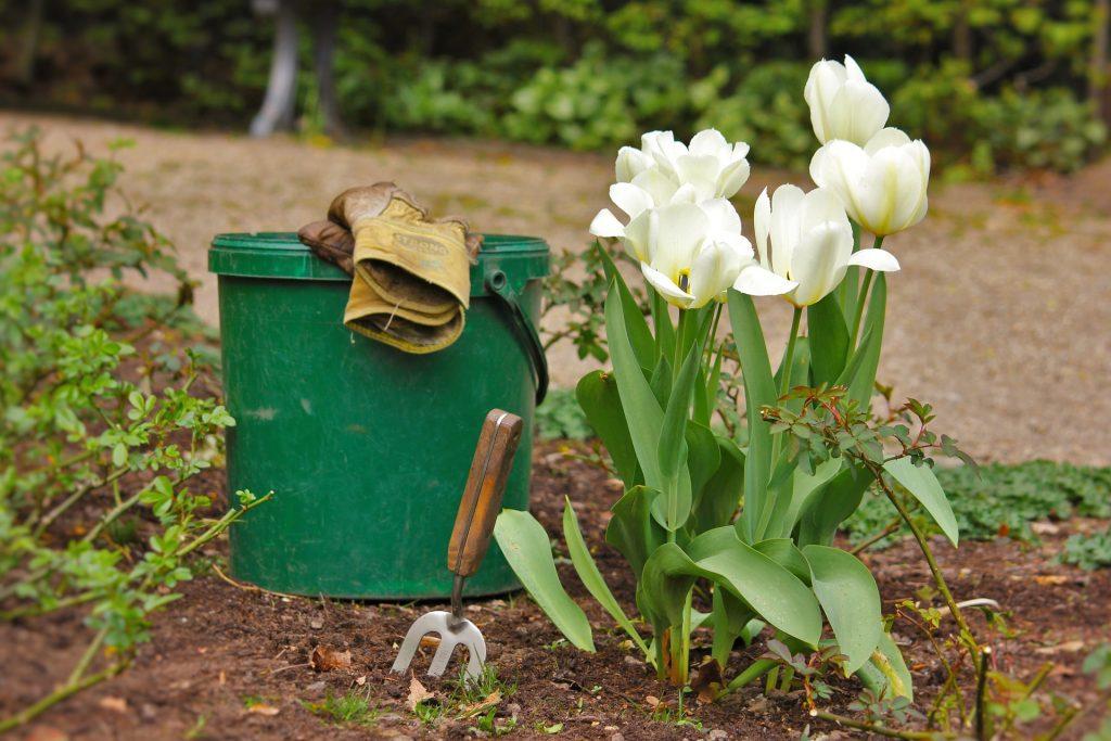 Imagem de flores ao lado de balde verde, garfo de jardinagem e luvas