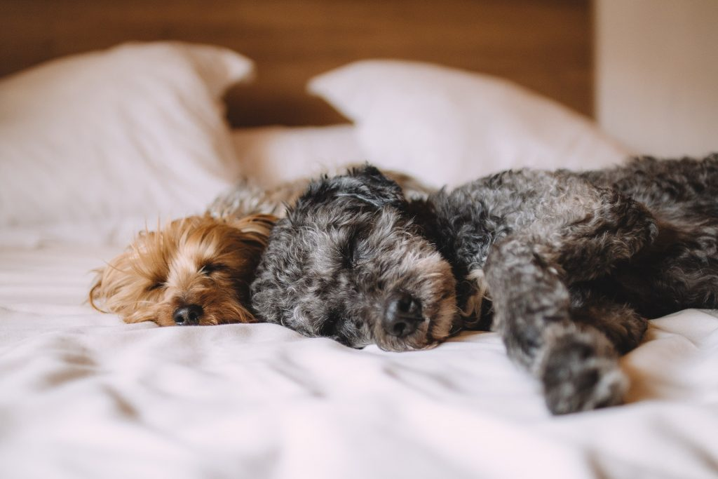 Na foto dois cães dormindo em cima de uma cama.