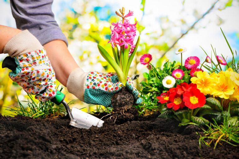 Mão com luva florida plantando flores.