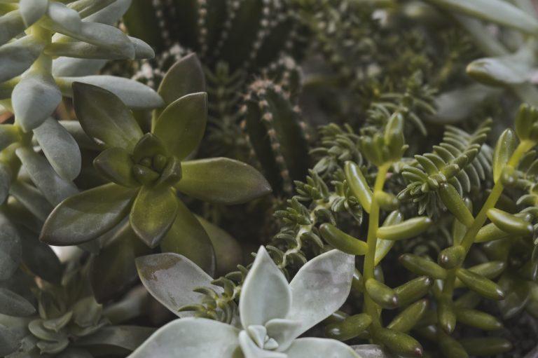 Foto de suculentas tirada bem de perto, mostrando vários detalhes.