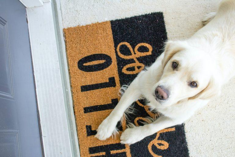 Imagem de cachorro branco deitado sobre capacho preto e marrom junto de porta de madeira