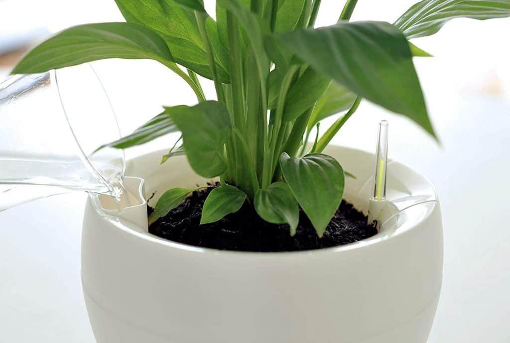 Copo abastecendo vaso autoirrigável com água.