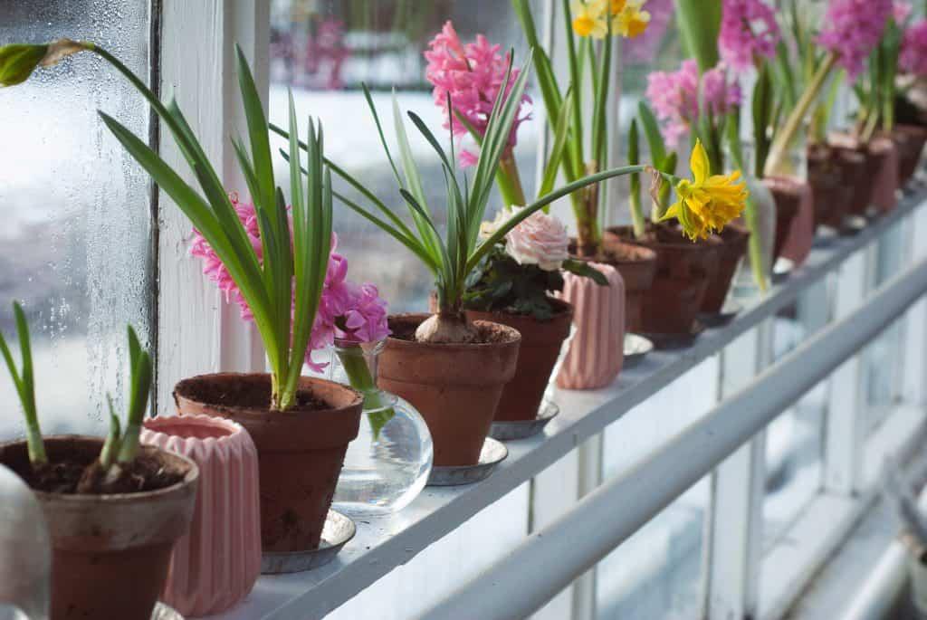 Fileira de vasos decorativos com flores e plantas na janela.