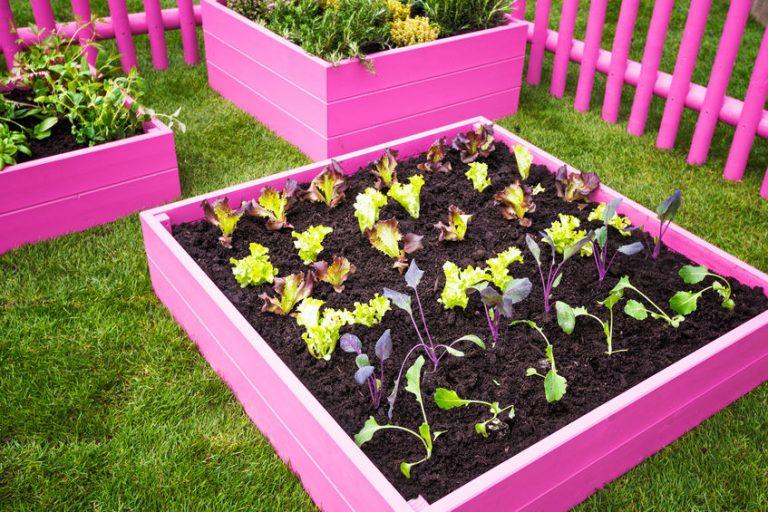 Horta com acabamentos de madeira em cor de rosa.
