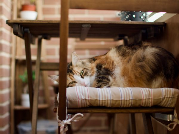A almofada para cadeira deve ser escolhida em uma cor que combine com os tons já presentes no ambiente. (Fonte: Edelle Bruton/ Unsplash)