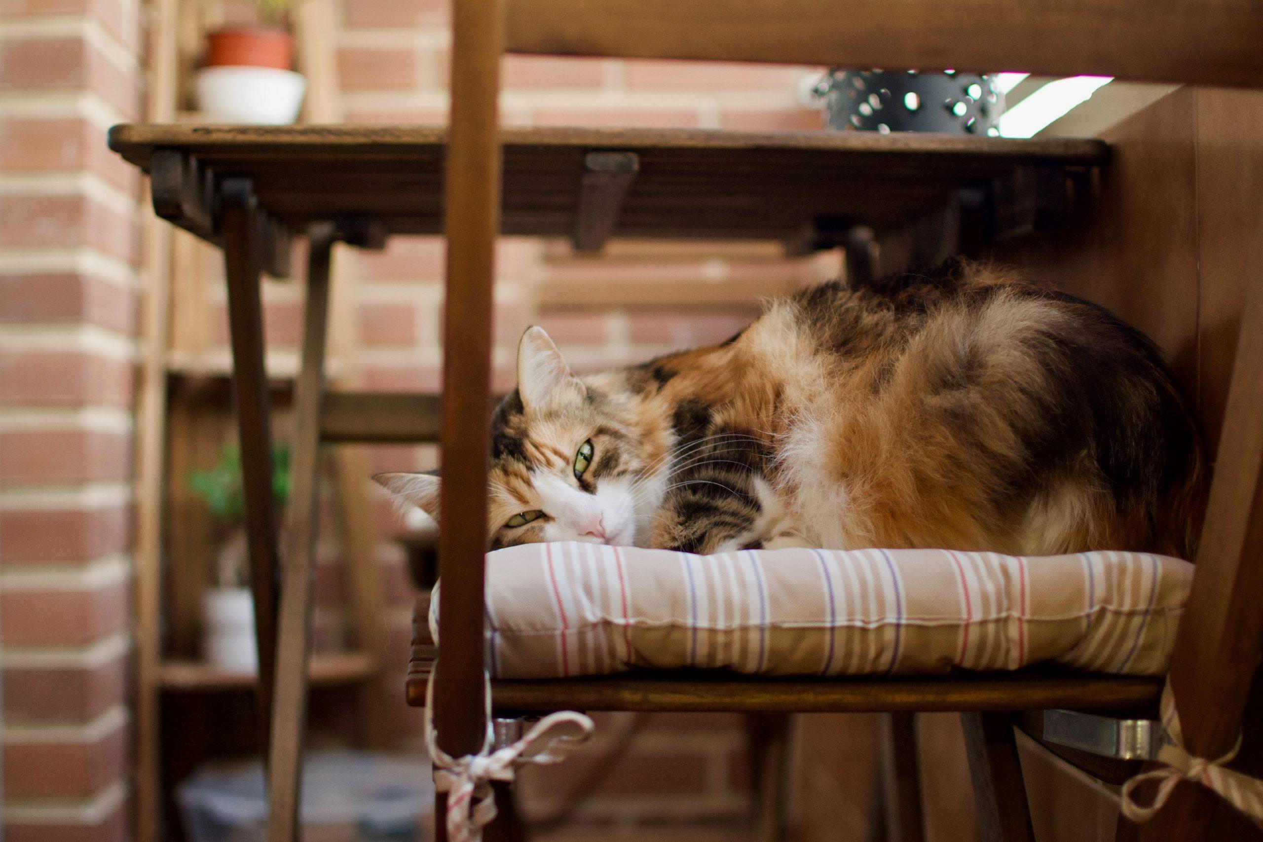 Na foto um gato deitado em uma cadeira.