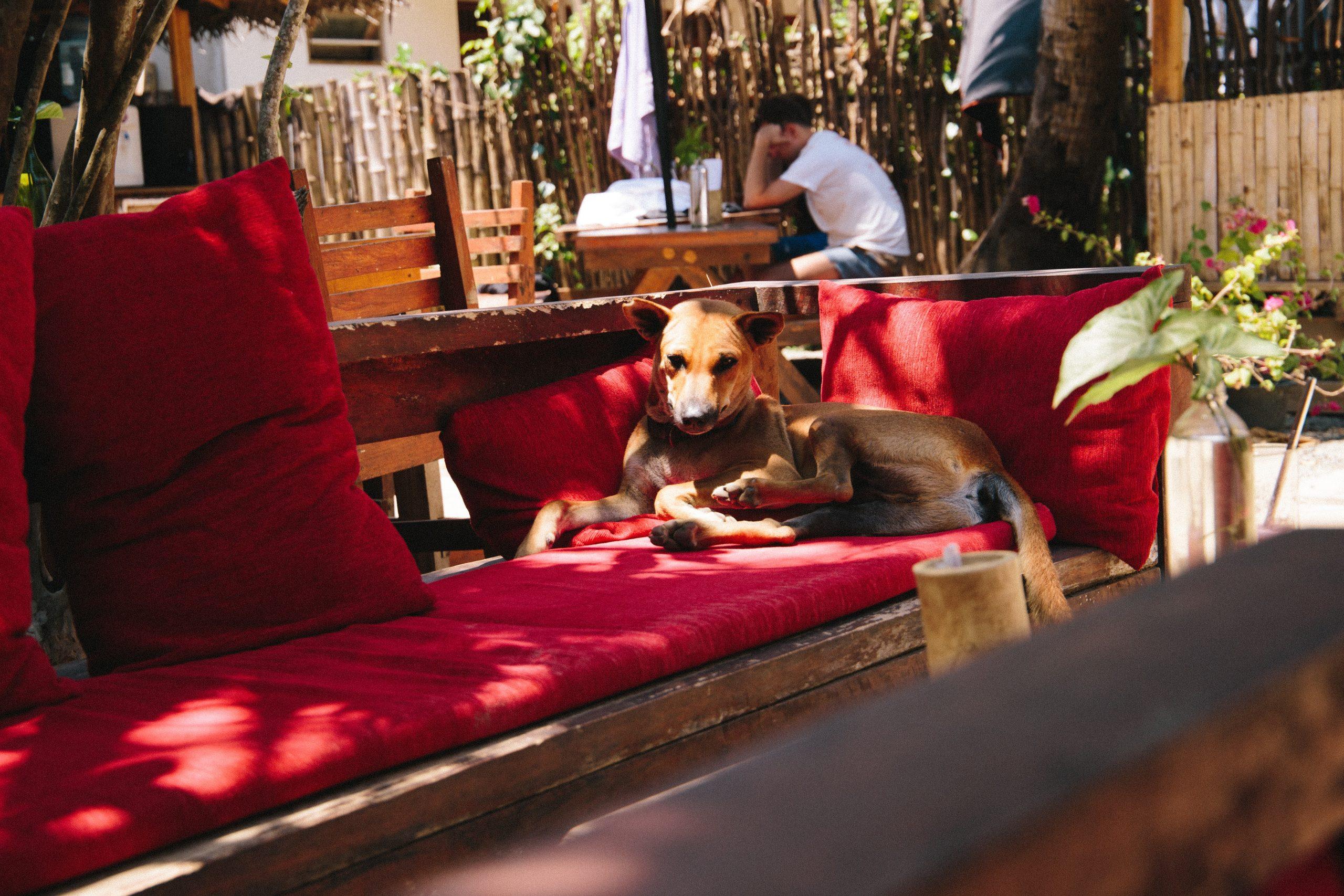 Na foto um cachorro deitado em cima de um banco em uma área externa.